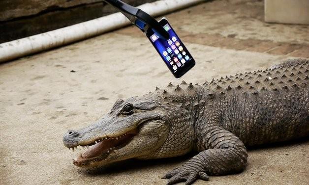 Што е посилно: iPhone 7 или вилицата на алигаторот?